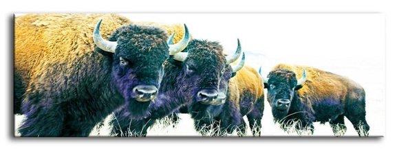 Bild Bilder Gemälde Druck Kunstdruck Polster Kultur Abstrakt Bulle Buffalo 93280