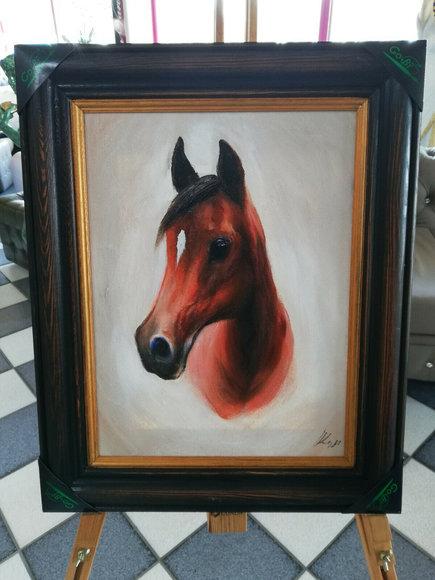 Ölbild Ölbilder Gemälde Bilder Bild Handgemalt Öl mit Rahmen Pferd G02570 SOFORT